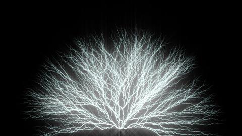 Tree form lighting type1 CG動画