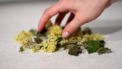 Dried healing plants mixed by hand Footage