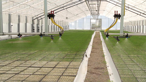 Automatic Watering and Of Plants Pine Trees In The Greenhouse Footage