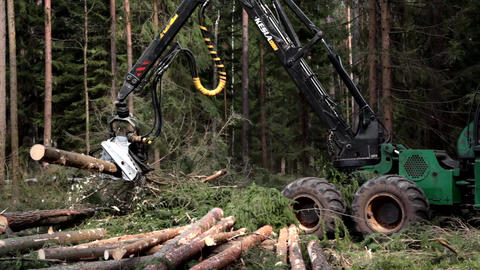 Harvester logging pine timber in the forest Live Action