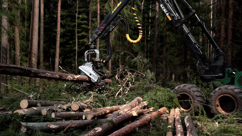 Harvester logging pine timber in the forest Footage
