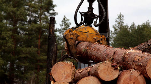 Pine timber logging by forwarder in the forest close-up Footage