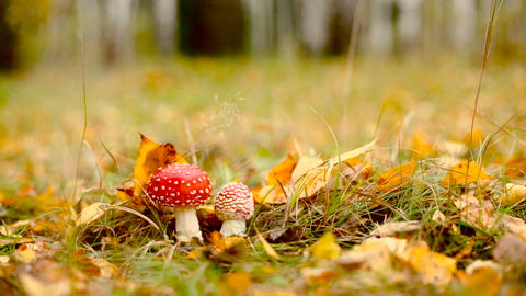 Autumn Forest 0