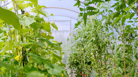In the greenhouse plants are grown for food Footage