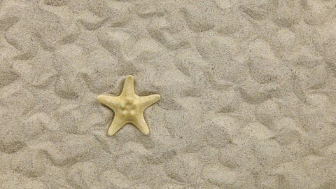 Approximation of starfish lying on the sand Footage