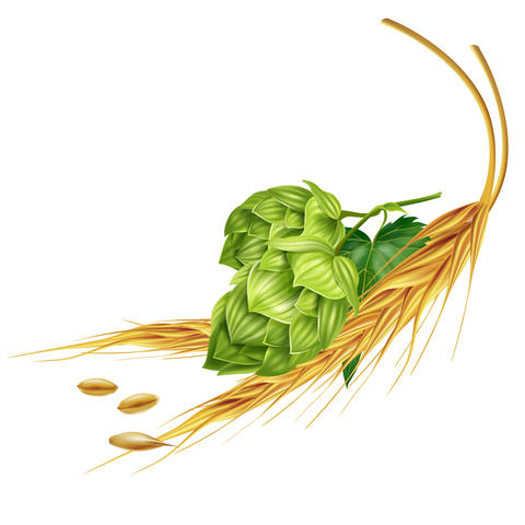 Hops and malt on white background Photo
