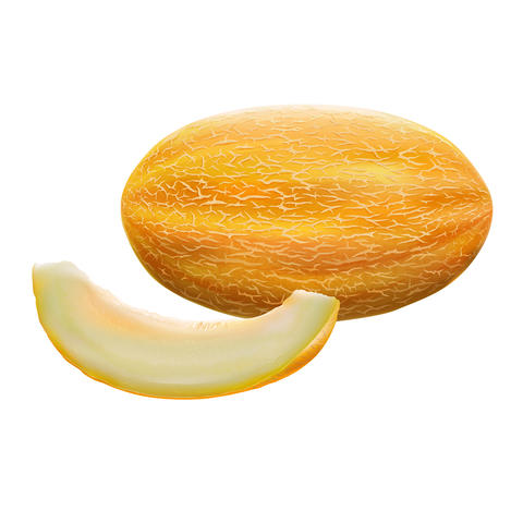 Melon on white background Fotografía
