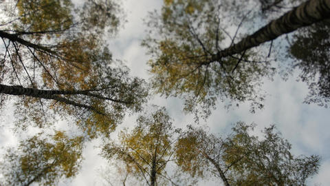 Tops of the trees covered with yellow leaves in autumn park Footage