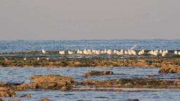 Gulls flock on the beach Footage