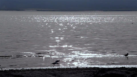 Beach Bird Silhouettes stock footage