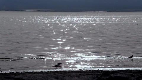 Beach Bird Silhouettes Footage