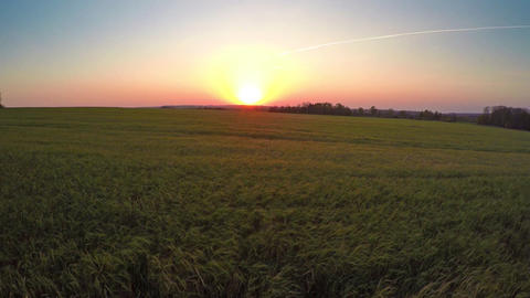 Flying to sunset over field with ripe wheat Footage