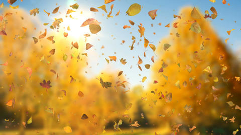 Autumn Fall Leaves Sideways 4k - Realistic Falling Leaves Video Background Loop Animation