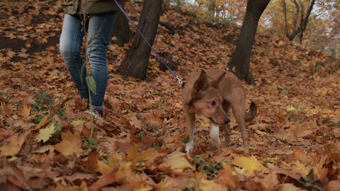 Young female and her pet take a walk in the forest Footage
