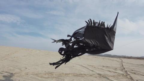 Black Kite Lifting Off of Sand Footage