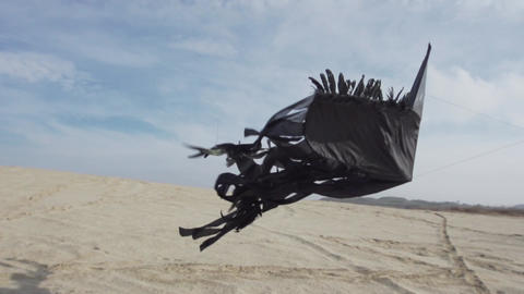 Black Kite Flies Elegantly Over Sand Footage