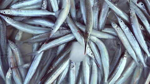 Fish Archivo