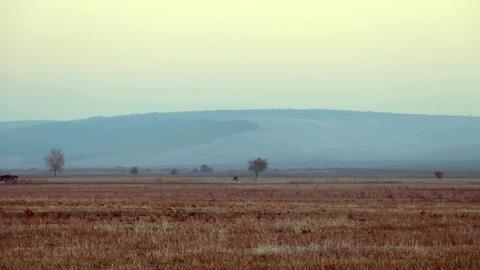 Steppe Footage