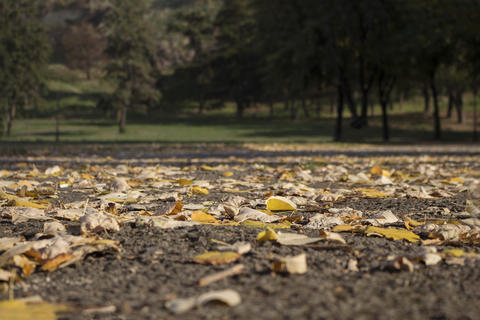 Autumnal Park With Golden Leaves and Trees. Fall Concept Foto