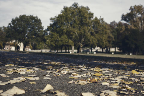 Autumnal Park With Golden Leaves and Trees. Fall Concept Fotografía