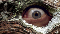 Peeper eye from hollow tree Footage