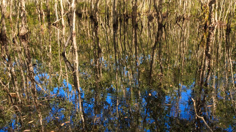 Camera Moves across Blue Sky Trees Reflection in Pond Footage