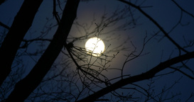 Focusing the moon over the tree's branches at nigh Footage