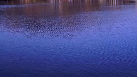 水面 water lake ビデオ