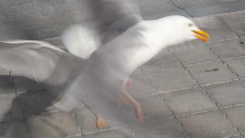 seagull eating cake on street Footage