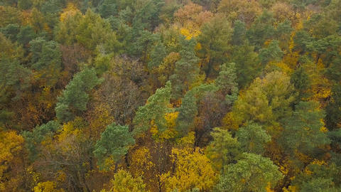 View from the height on the autumn forest Footage