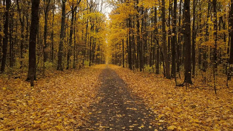 Flight along a path in a scenic autumn forest Footage