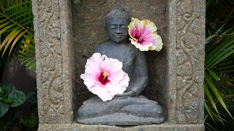 Buddha Statue with Pink Hibiscus Flowers Footage