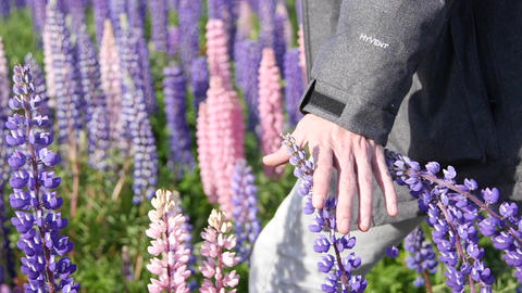 Hand Trails Over Lupine Flowers Archivo