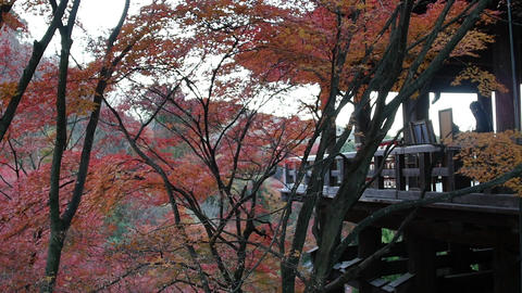 Wooden Balcony Among Autumn Trees Footage