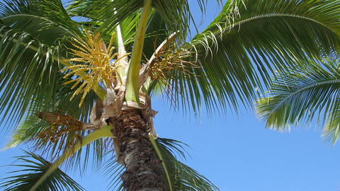 Palm Tree and Blue Sky Background Footage