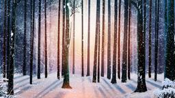 Winter Wood 0