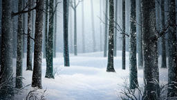 Winter Wood 1