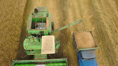 Top view combine harvester pours out wheat into the truck at sunset. Harvesting Footage