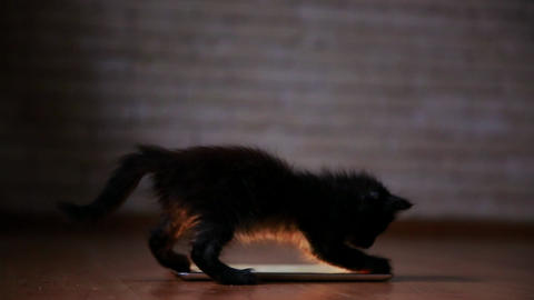 A little black kitten in the evening is playing with a screen tablet computer Footage