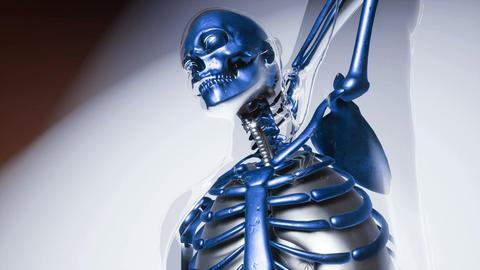 human skeleton bones model with organs Footage