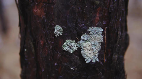 the trunk of a tree in an autumn forest. cinematic shot, slow motion Footage