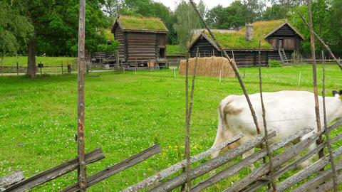 animal husbandry livestock breeding, norwagian village, green grass rooftop, nor Footage