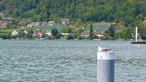 swiss lake view on alps mountain, switzerland Footage