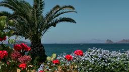 Turkey the Aegean Sea Turgutreis 037 plants and landscape Footage