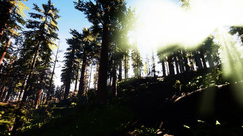 Flying through the beautiful sunny forest trees Animation