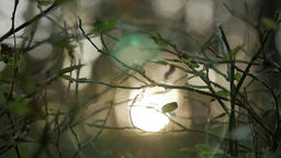 Sunlight shining through the branches , natural blurred background, Nature Footage