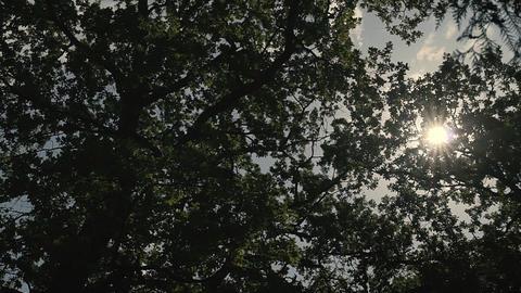 Sun Light Through the Trees Footage
