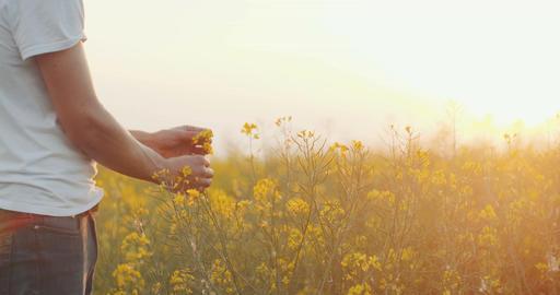 AGRICULTURE - Farmer Examining Rape Blossom In Rape Field Footage
