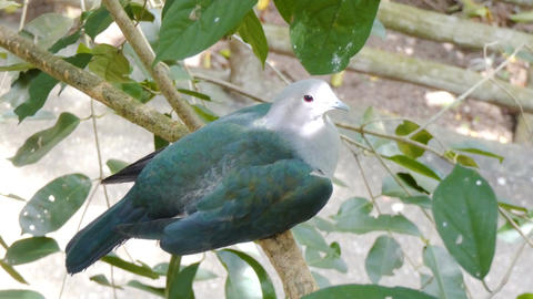 4K Green bird on the branch of natural tree Image