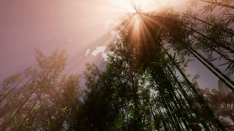 4K The sun's rays make their way through the bamboo grove Footage